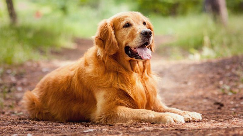 Đây là loại bệnh thường xảy ra ở những chú chó dưới 6 tháng tuổi.