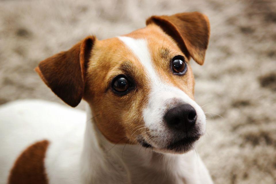 Bệnh viêm dạ dày ở loài chó