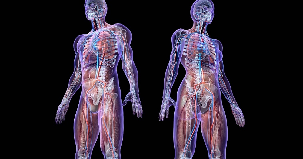 Cơ thể có chức năng sinh tồn tự nhiên